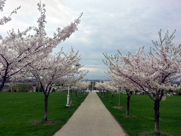 places of Ontario to Visit in Spring