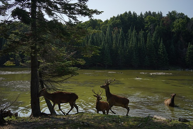honeymoon destinations in Quebec